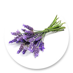 lavender_icons